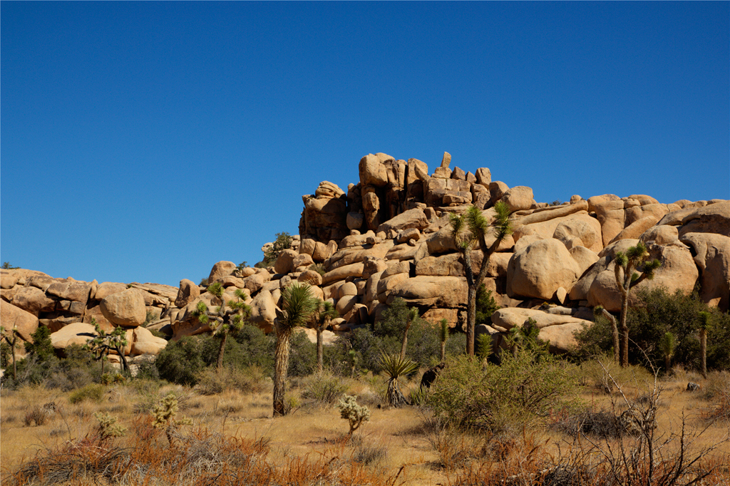 Image Of Joshua Tree Landscape
